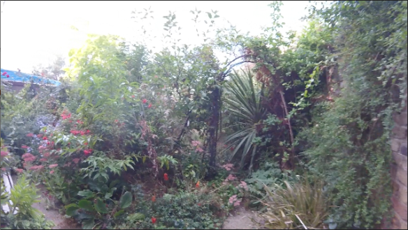 Alderbrook Garden 2016